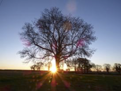 Tree Sunset image